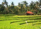 Bali-Ubud_2.2